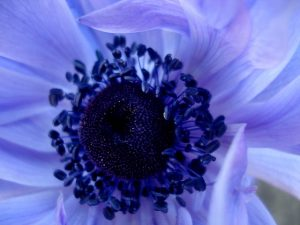 Shades of Blue - Photo by ananyah.COM