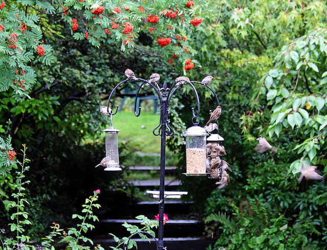 Bird feeder - Photo by  Gareth Williams