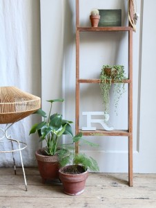 Plants with ladder shelf - Photo Etsy/Pinterest