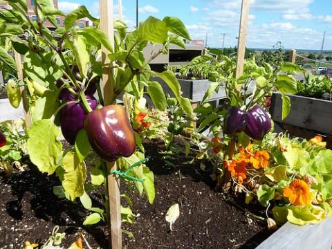 Vegetable roof garden - Photo by  New Brunswick Tourism | Tourisme Nouveau-Brunswick