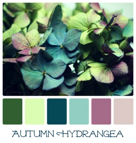 Autumn Hydrangea color palette