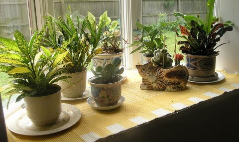 Plant-pots by the window - Photo by Gail Frederick