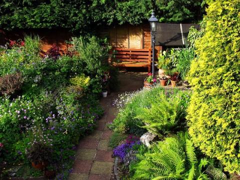 Garden shrubbery - photo by Snapshooter46