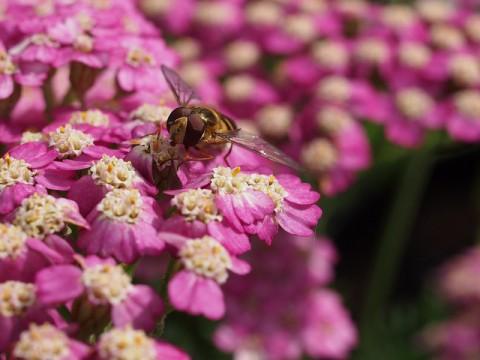 Wildlife friendly - bee - photo by Kimb0lene