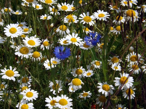 Wild flowers - photo by just1snap
