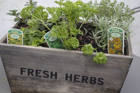 Herb Box - by Dave Bleasdale