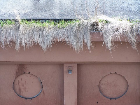 Grass growing in the gutters - Photo by Weston Renoud