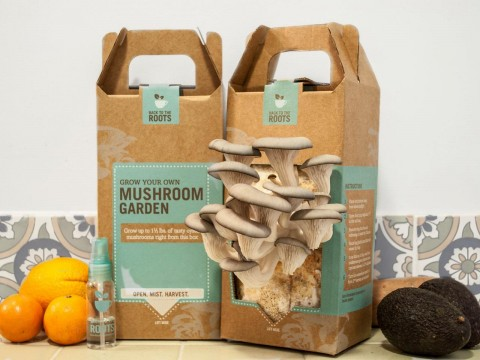 Awesome Gardening Gift Ideas For The Gardener In Your Life - Mushroom Growing Kit