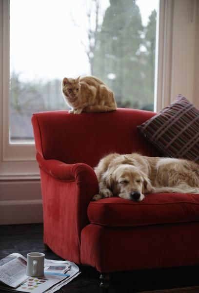 Home Alone? 4 Great Ways To Help You Relax And Ease Your Worries - Companion Cat & Dog