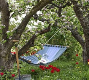 The Lazy Guide To Creating The Perfect Garden