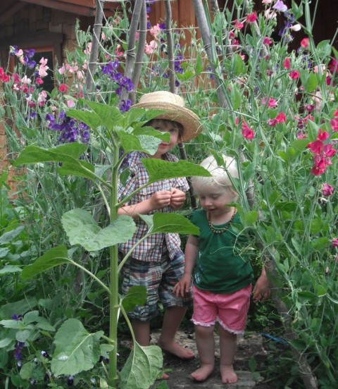 Tips for Creating a Family Garden