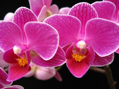 Environmentally Friendly Interior Design Hints And Tricks - Orchid