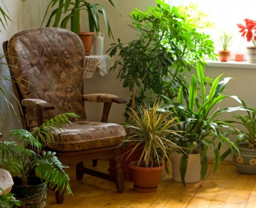 Environmentally Friendly Interior Design Hints And Tricks - Air Purifying House Plants