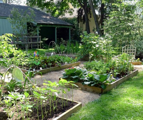 Growing Vegetables: Organic Gardening For Beginners