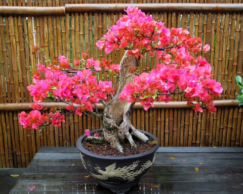 5 Ways To Create A Relaxing Garden - Bamboo Fencing & Pink Bonsai Tree
