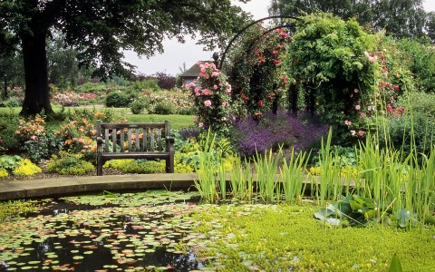 5 Ways To Create A Relaxing Garden - RNRS Rose Gardens - The Gardens of the Rose, Hertfordshire, UK