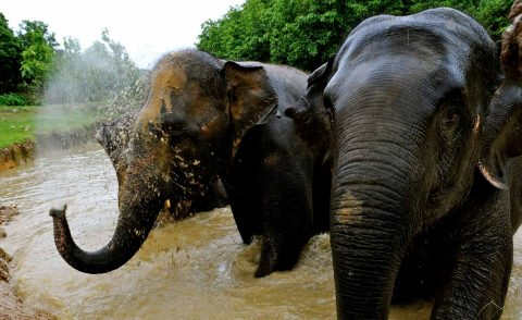 Dipping My Toes Into The World Of Digital Nomads - Boon Lott's Animal Sanctuary