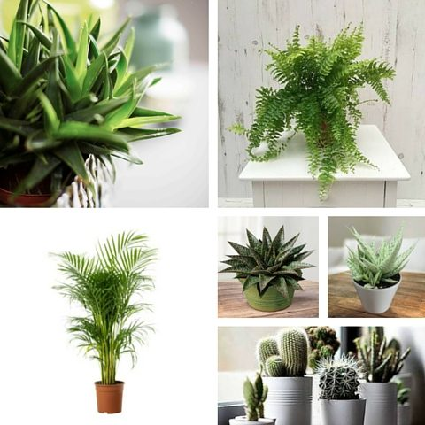 How To Obtain The Furniture Village Natural Woodland Style Within Your Home - House Plants