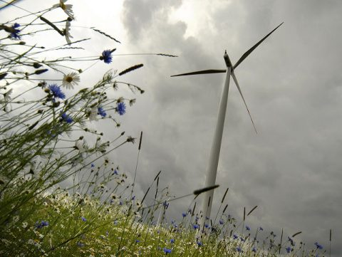 7 Tips For Running An Energy Efficient Home - Small Wind Turbine & Wild Flowers