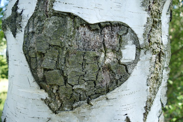 It's Not Easy Being Green: Solutions For The Eco-Friendly Novice - Heart In Tree