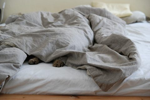 4 Tips For insulating Solid Walls In Your Home - Pets Snug Under The Duvet