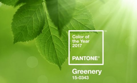 Greenery Chosen as Pantone Colour of the Year 2017