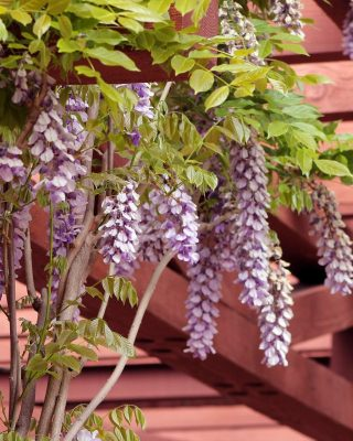 Pergola VS Gazebo – Which Is Right For Your Garden?