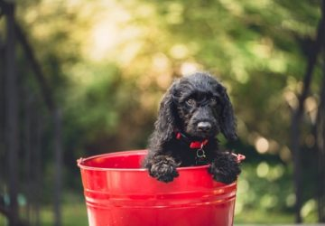 Is Your Garden Dog Friendly