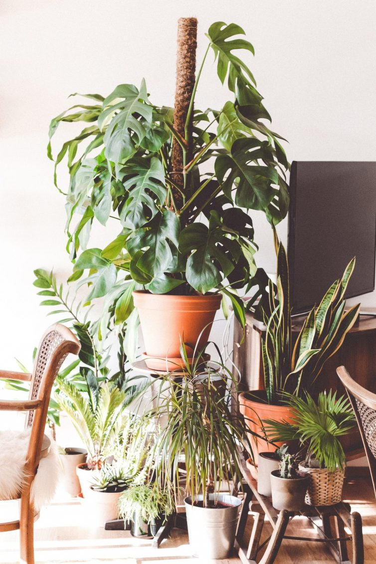 The Best Low Maintenance Houseplants - Easy Care Plants That You (Probably) Won't Kill - Snake Plant - Split Leaf Philodendron