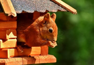 Creating A Wildlife Friendly Garden - Squirrel