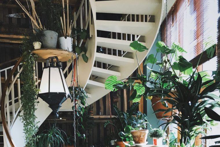 The Best Low Maintenance Houseplants - Easy Care Plants That You (Probably) Won't Kill