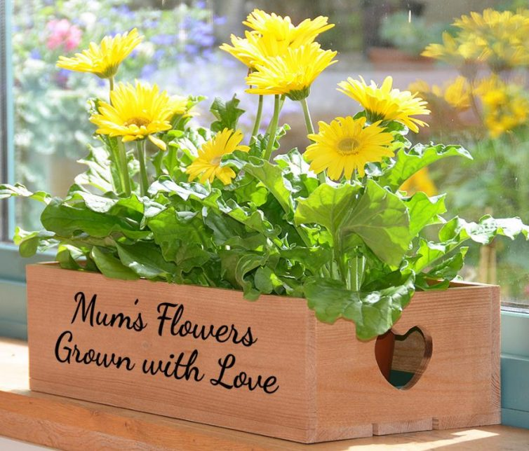 Using Plants To Transform Your home - Plant Box