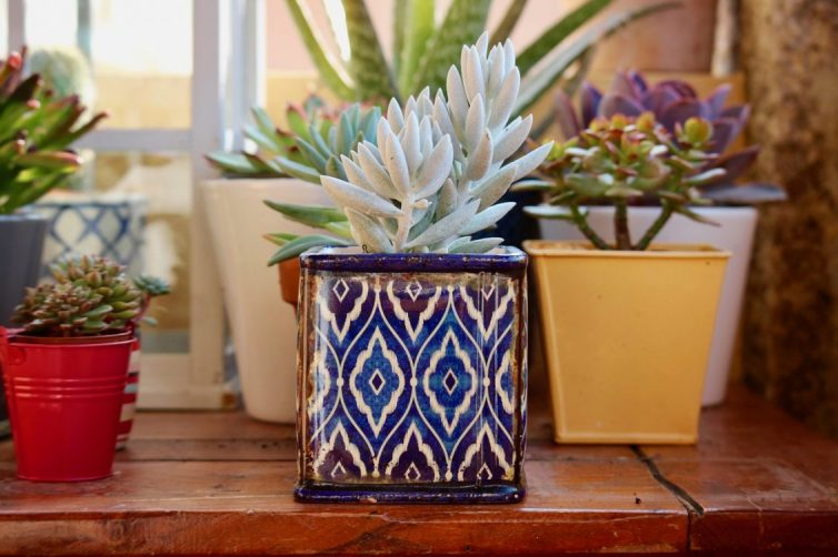 Using Plants To Transform Your home - Succulents