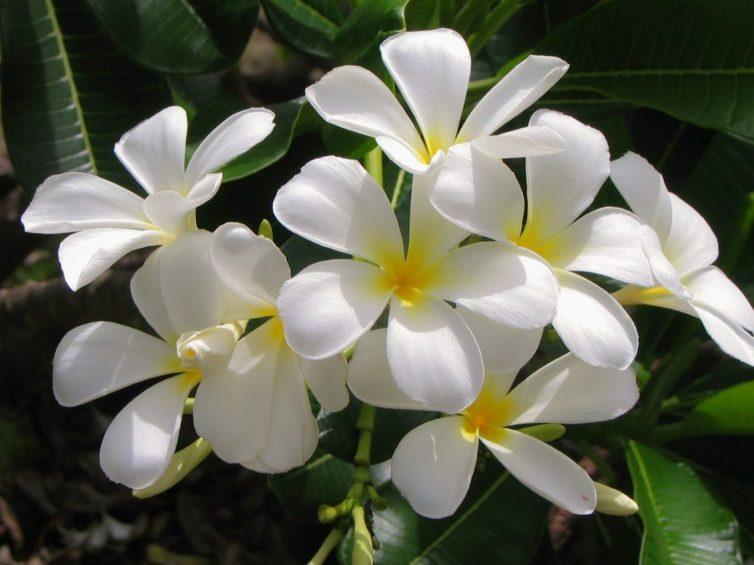 Using Plants To Transform Your home - Jasmine