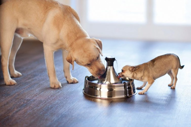 Pampered Pooch - 5 Items All Dog Owners Need - Drinkwell 360 Pet Fountain