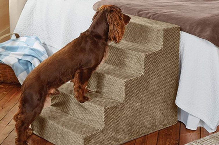 Pampered Pooch - 5 Items All Dog Owners Need - Pet Steps - Image From Orvis