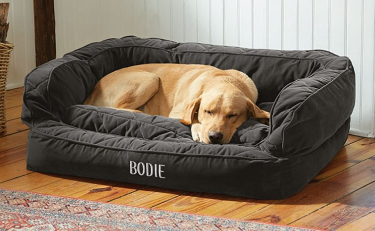 Pampered Pooch - 5 Items All Dog Owners Need - Memory Foam Bed - From Orvis