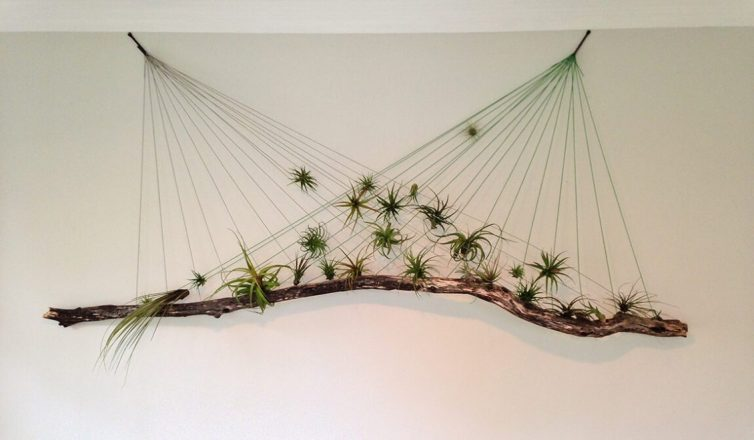 Air plant hanging display