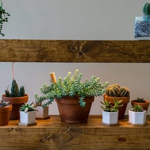 Home made wood & industrial pipe succulent shelf with built in grow light