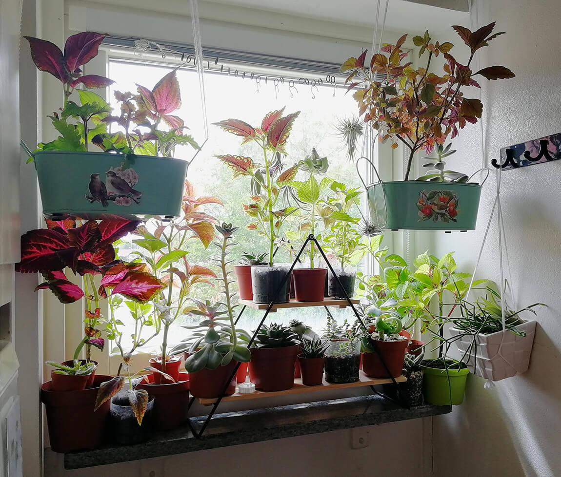 9 Creative Plant Shelves Amp Hanging Displays