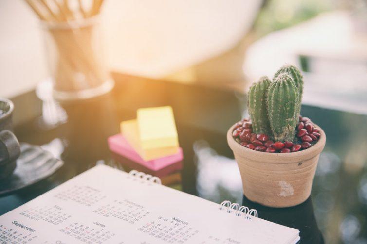 Office Plants - Cactus