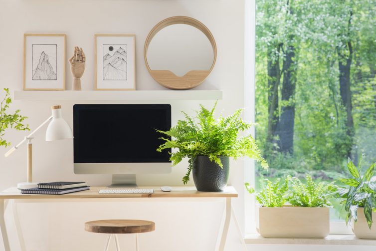Planting For Productivity - Plant Office Window