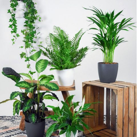5 air-purifying plants - Image Via Bakker.com