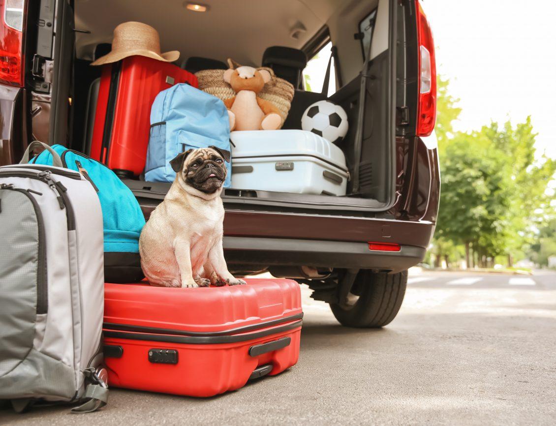 Car, Luggage, Pug.