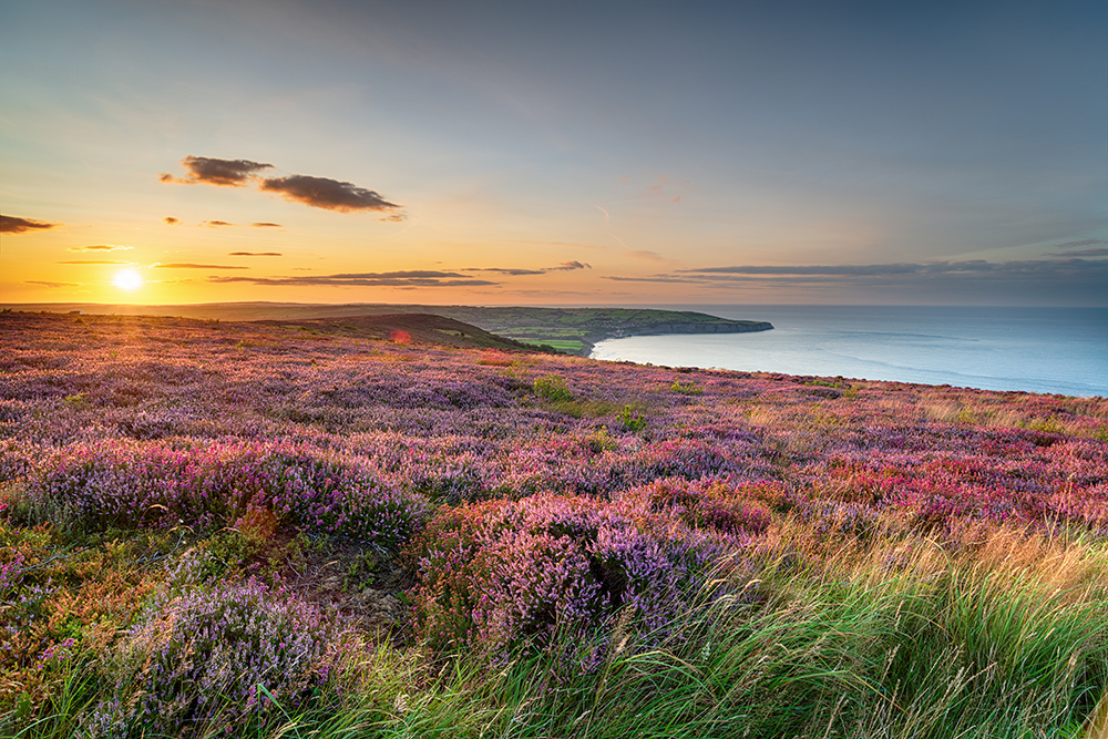 Sunset over heather in bloom on the North Yorkshire Moors National Park