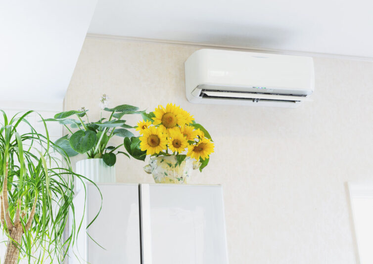Air Conditioning Unit and house plants