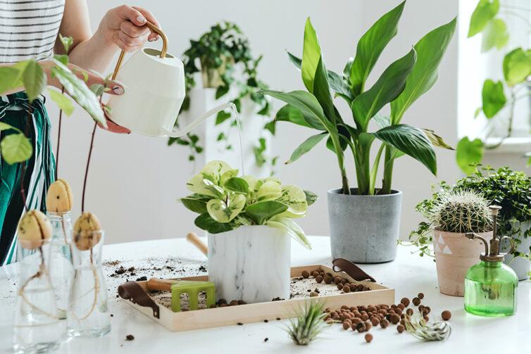 Indoor garden. Indoor gardening