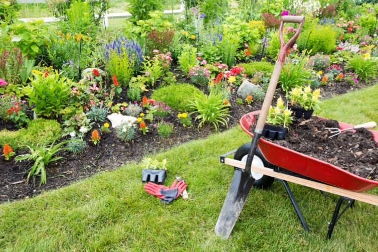 Garden plants, wheelbarrow and spade