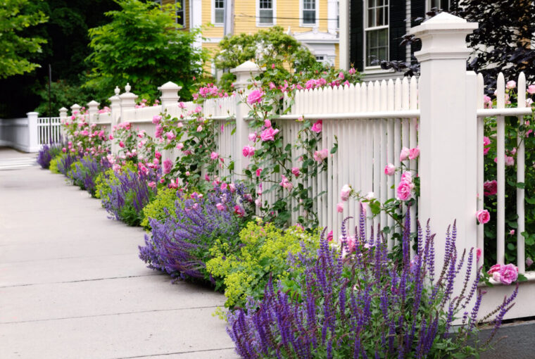 White fence, pink roses, and colorful garden border
