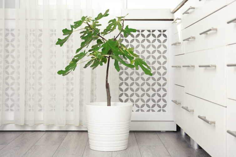 Radiator in kitchen with radiator cover and plant in pot
